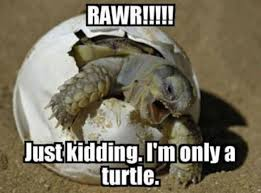 Image result for funny animal memes