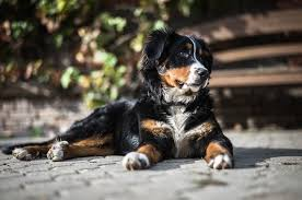 """<b>Dog</b> Names that Mean """"<b>Strong</b>"""" 