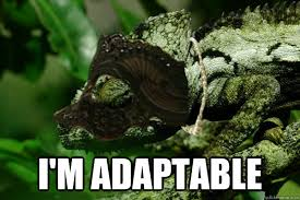 I'm adaptable - Cat-Chameleon - quickmeme via Relatably.com