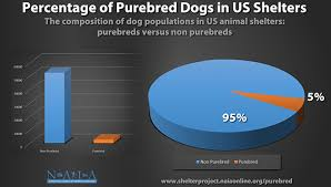 NAIA study confirms fewer dogs, scarce purebreds in US animal …