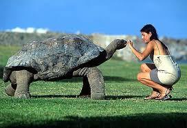Resultado de imagen de tortuga gigante galapagos