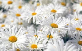 வால்பேப்பர்கள் ( flowers wallpapers ) - Page 5 Images?q=tbn:ANd9GcTrQQTIn6woxJ22ln7lhugzcFxplqRbji_PqsdZ4LqSn6MqNzX9