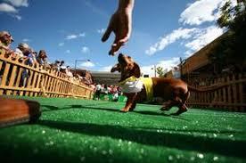 Denver Oktoberfest: 14th Annual Long Dog Derby Tickets, Sun, Sep ...