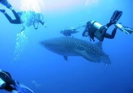 Belize <b>Full Moon</b> – Whale Sharks   Blue <b>Sphere</b> Media