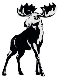 Image result for moose