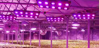 Pildiotsingu Led grow lights tulemus
