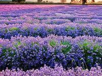 Сиреневый, лиловый, <b>розовый</b>: лучшие изображения (65 ...