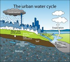 blueplanet   science year  and  natural and urban water cyclesthe urban water cycle  figure   shows the consequences of increased development  more development and more concrete means less infiltration of rainwater