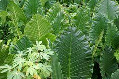 Αποτέλεσμα εικόνας για φυτα φωτογραφιες