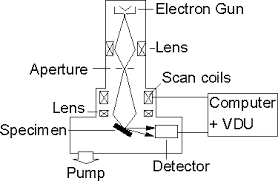 schematic diagram of a scanning electron microscope  adapted from reference