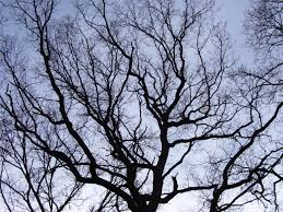 Image result for tree branches images