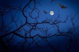 <b>Gothic</b> Fantasy <b>PRINT HALLOWEEN</b> Witch Bats Harvest Moon night ...