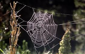 Scientists <b>simulate spider's web</b> by developing a liquid wire with the ...