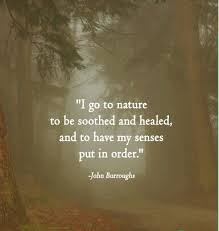 Inspirational Nature Quotes on Pinterest   John Muir, Henry David ...