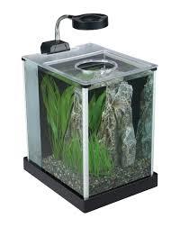 amazoncom fluval spec desktop glass aquarium 2 gallon aquarium decor pet supplies office desk aquarium