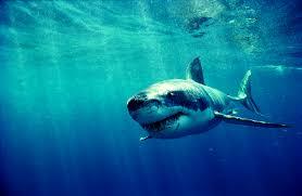 Image result for SHARK WEEK