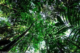 Image result for Brazilian Rainforest