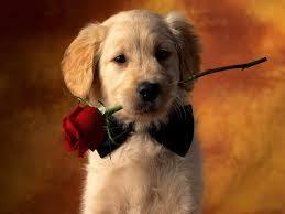 """Résultat de recherche d'images pour """"une rose"""""""