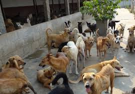 600 πρόβατα θύματα σκύλων...