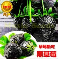 1bag=<b>300PCS</b> Black <b>Strawberry</b> Seeds <b>Bonsai</b> Rare Fruit Seeds ...