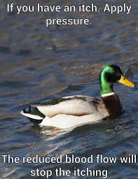 Image - 588892] | Actual Advice Mallard | Know Your Meme via Relatably.com