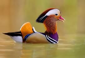 اجمل العصافير في العالم images?q=tbn:ANd9GcT