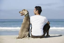 Resultado de imagen para imagenes de perros con sus dueños