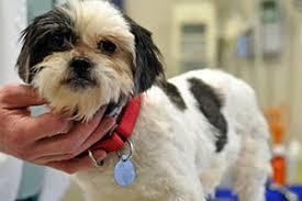 <b>Animal</b> Poison Control | (888) 426-4435 | ASPCA