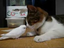 Image result for cats playing with strange friends
