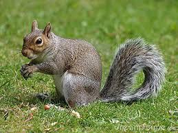 Animal Totem - Squirrel Images?q=tbn:ANd9GcTuPGWJ1r9rsokz4jdRraPICxJs9LaciIS05BgXAcq7gRhnbw_c-g