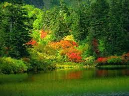 لكل محبي صور الطبيعة  اكبر تجميع لصور الطبيعة - صفحة 3 Images?q=tbn:ANd9GcTuX0VbDUR9xApuWFJDjBS-DVPnJYElqvuGIjEabwkhNLkCusHpDQ