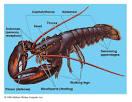 Images & Illustrations of class Crustacea