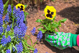 Image result for springtime flowerbeds