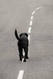 תוצאת תמונה עבור כלב עזוב