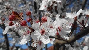 """Résultat de recherche d'images pour """"mimipalitaf fleurs"""""""