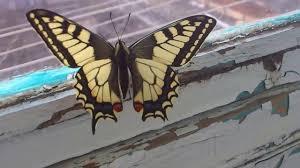 <b>Бабочка Махаон</b> / <b>Butterfly</b> Mahaon - YouTube
