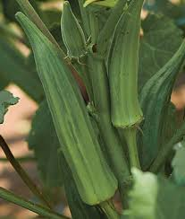 Image result for pictures Florida okra