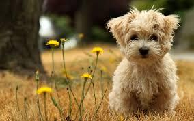 Curiosidades de los Perros. pt 1