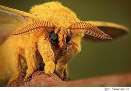 Image result for terrifying insects