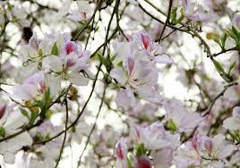Kết quả hình ảnh cho Hoa mùa xuân