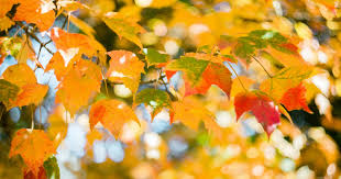 """Why Do We Call <b>Autumn</b> """"<b>Fall</b>""""? Turns Out, Both Terms Have A Lot ..."""