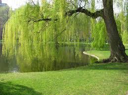 كيفية زراعة الأشجار Images?q=tbn:ANd9GcTvF7rkhoSQJmJB2DOWrijb-r0EtT6pAg66RWfJNFO_inZE5h2y