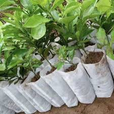 US <b>100pcs Garden</b>-<b>Plant Fiber</b> Nursery Pots Seedling Raising Bag ...