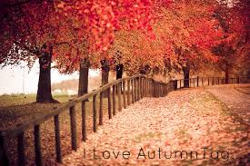 Image result for pretty november pictures