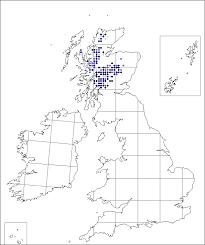 Sibbaldia procumbens | Online Atlas of the British and Irish Flora