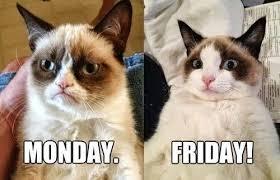 Memes Vault Friday Grumpy Cat Memes via Relatably.com