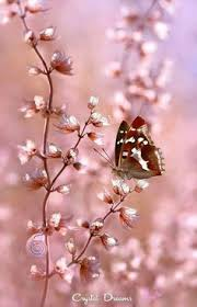 Butterflies and dragonflies on Pinterest | Butterflies, Fireflies ...