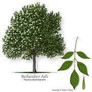 shade <b>tree</b>
