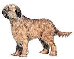 Από πού προέρχεται ο σκύλος Briard;