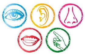 Αποτέλεσμα εικόνας για verbs of senses